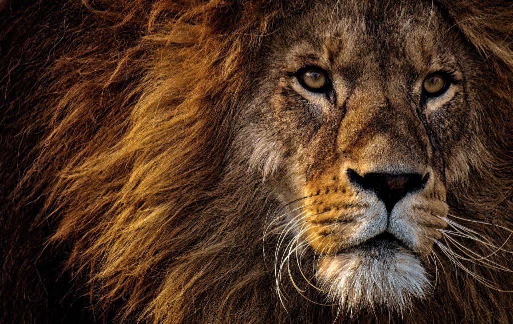 Talentcube punktet bei den Löwen